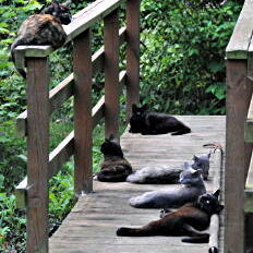 cats_bridge